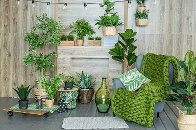 13 Best Indoor Plants and How to Care for Them by Architectural Digest